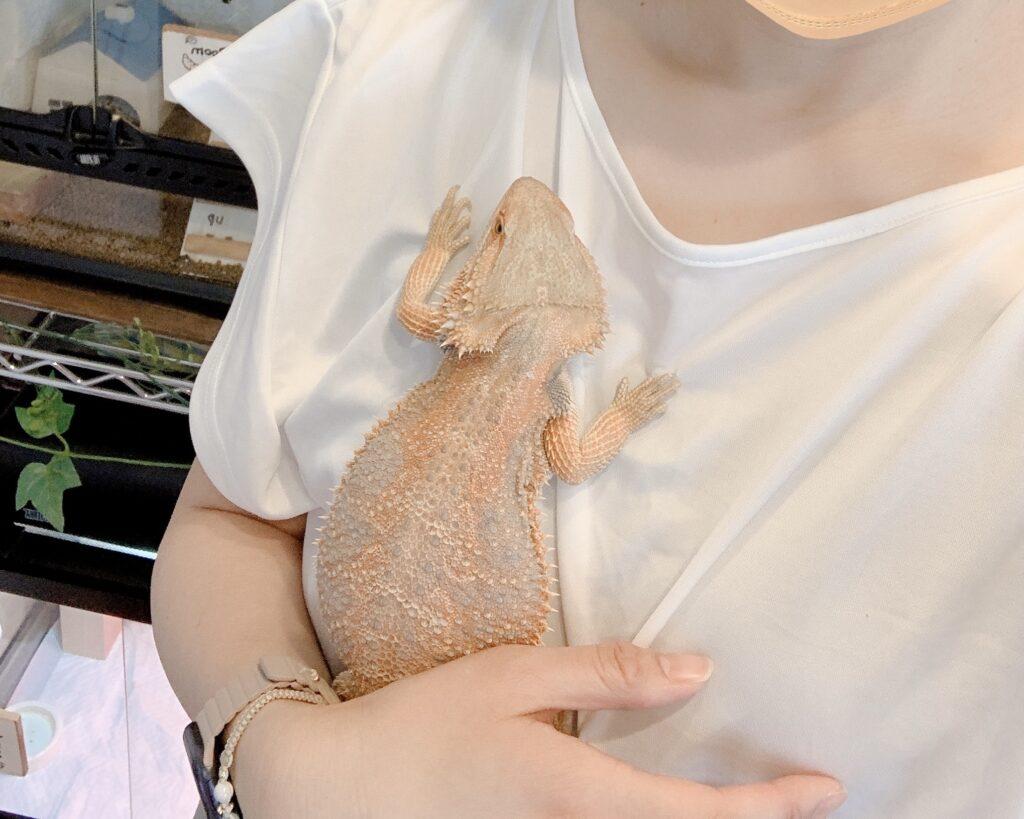 フトアゴヒゲトカゲを抱っこしている様子