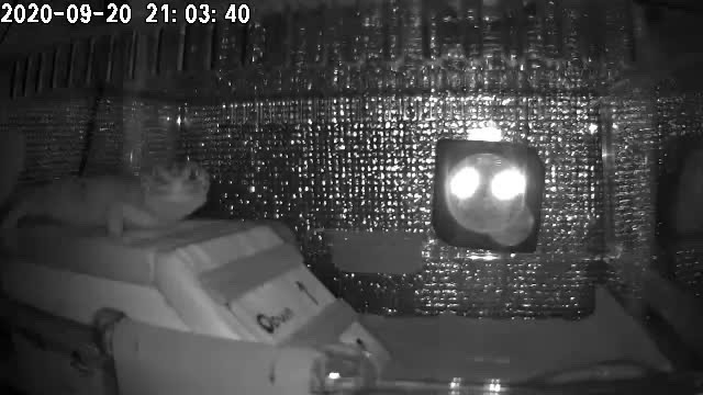 ペットカメラの夜の映像