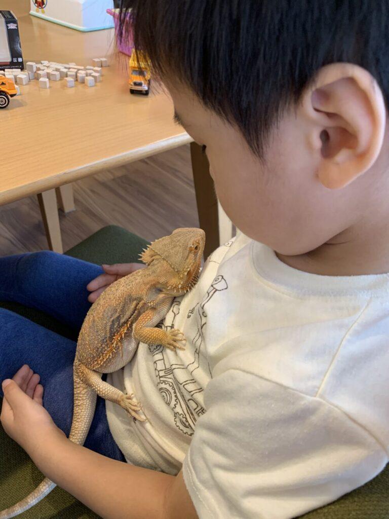 フトアゴヒゲトカゲと子ども
