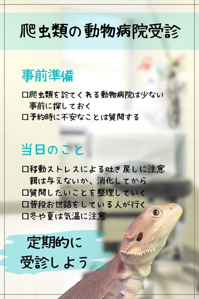 爬虫類の動物病院受診まとめ